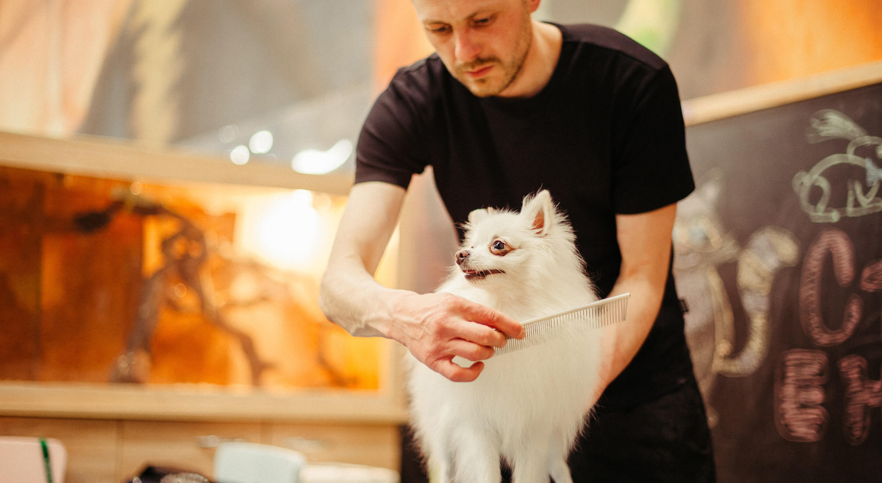 a small white chihuahua being groomed by a pet groomer