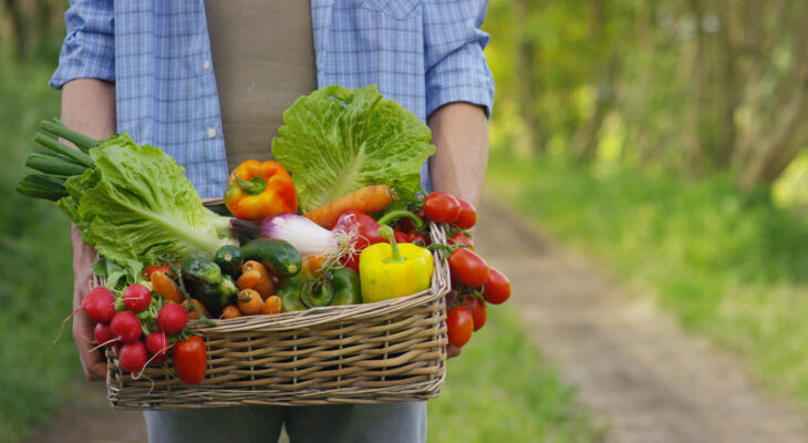 young local farmer holding fresh vegetables in a basket ready for distribution to food trucks